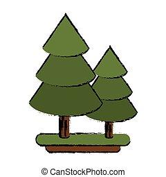 canadian evergreen tree pine sketch