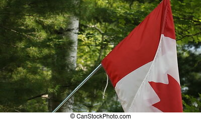Canadian flag and forest background - Closeup of Canadian...