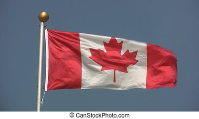 Canadian flag. - Canadian flag blowing in the wing. Gold...