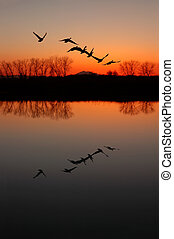Silhouette of Canadian Geese and Red Sunset Reflected in Wildlife Pond, San Jaoquin Delta, California