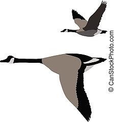 Couple of migrating geese