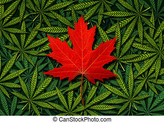 Canadian marijuana concept and Canada canabis law and legislation social issue as medical and recreational weed usage icon as a red maple leaf on a background of green pot symbols in a 3D illustration style.