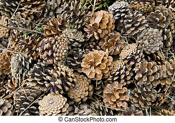 Canadian pine cones background