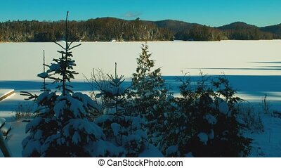 canadian winter forest