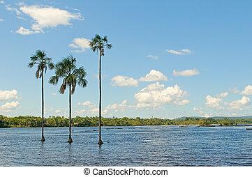 canaima, λιμνοθάλασσα , βενεζουέλα