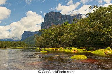 canaima, nemzeti, venezuela, liget