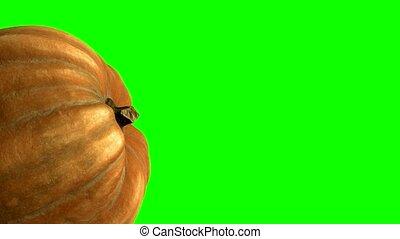 canal, citrouille, arrière-plan vert, 4k, tourner, 3d, alpha