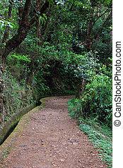 canal irrigação, madeira, ilha, portugal