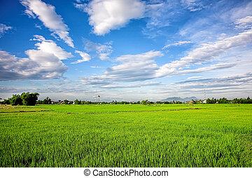 canal irrigation, système, dans, champ riz
