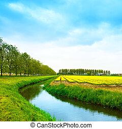 canal, keukenhof, fleurs, hollande, printemps, tulipe, fleur, arbres., arbres, champ jaune, culture, arrière-plan., pays-bas, europe., ou