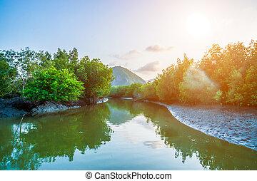 canal, mangrove, forêt