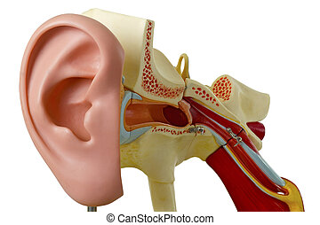 canal, modelo, auditivo