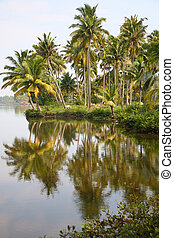 Canals in the Back Waters in Kerala