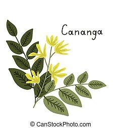 Cananga clip art vector and illustration 52 cananga clipart vector cananga odorata illustration cananga odorata isolated ccuart Choice Image