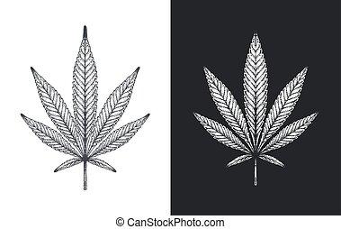 canapa, foglie, vettore, schizzo, marijuana, o