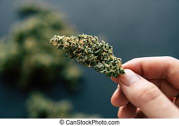 canapa, germoglio, in, mano, di, uomo, macro, di, canapa, erbaccia, marijuana, fiori, con, trichomes