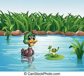 canard, dessin animé, grenouille, heureux