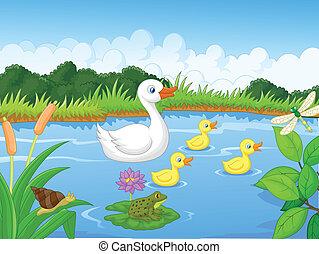 canard, dessin animé, natation famille