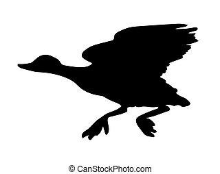 canard, oiseau, vecteur, silhouette