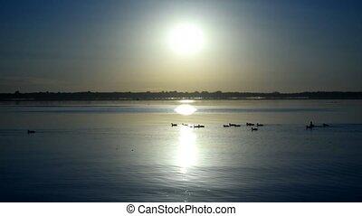 canards, eau, silhouettes, sauvage, troupeau, levers de soleil