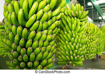 Canarian Banana Platano in La Palma canary Islands