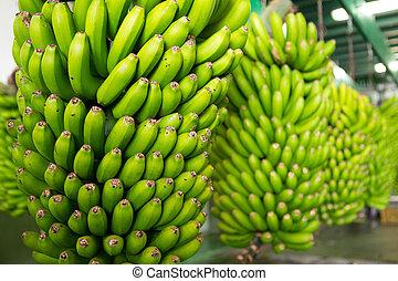 canarian, banane, platano, dans, la, palma
