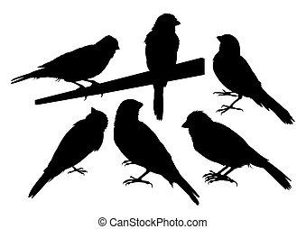 Canary bird silhouettes vector - Six canary bird...