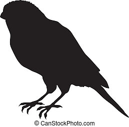canary - silhouette of canary