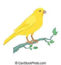 Canary vector. Domestic songbird concept in flat style design. Illustration for pet stores advertising, childrens books illustrating. Beautiful yellow canary bird seating on brunch isolated on white.