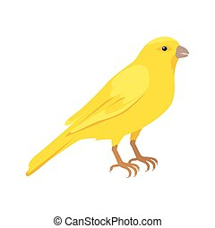 Canary Flat Design Vector Illustration - Canary vector....