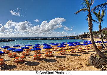 Canary island beach and Palm - A beach at Playa Blanca,...
