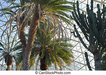 Canary Island Date Palm and Euphorbia