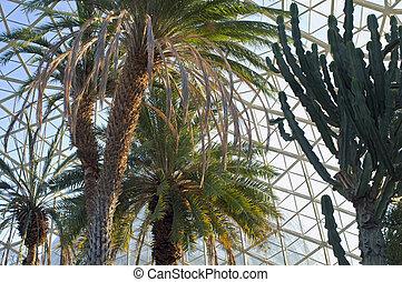 Canary Island Date Palm and Euphorbia
