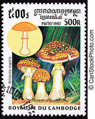 Canceled Cambodian Postage Stamp Fly Agaric mushroom,...
