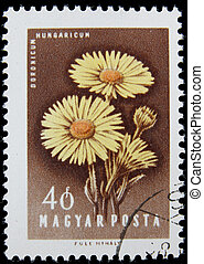 canceled postage stamp - post stamp printed in Hungary shows...