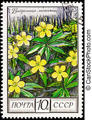 Canceled Soviet Russia Postage Stamp Ranunculus Yellow Buttercup