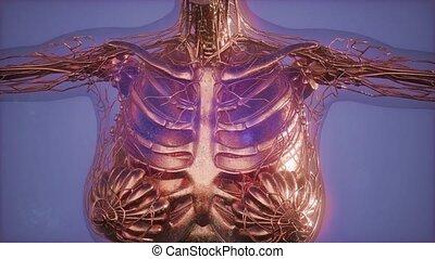 cancer, radio, imaging, diagnostic, mammogram, poitrine