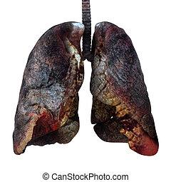 cancered, render, pulmões, isolado, white., 3d