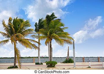 cancun, hôtel, lagune, zone, mexique