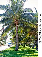 Cancun Kukulcan boulevard palm trees garden in Mayan Riviera...