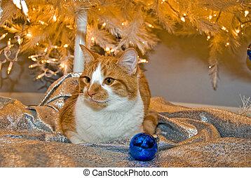 Candid Christmas