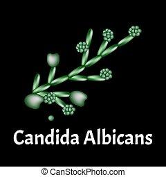 candidiasis., ベクトル, バックグラウンド。, イラスト, 隔離された, candida., ...