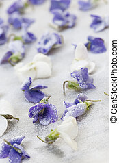 Candied violets - Candied sugared violet flowers drying on...