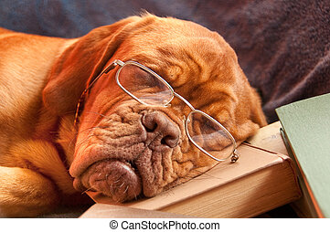 cane addormentato