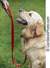 cane, allenamento obbedienza