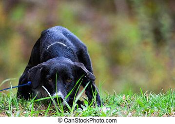 cane, appostando