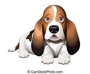 cane caccia bassetta, cucciolo