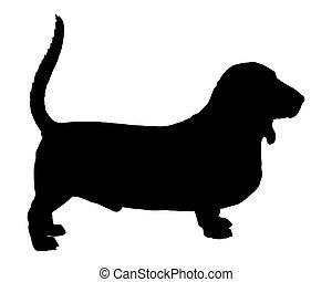 cane caccia bassetta