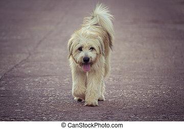 cane cammina, solo, strada