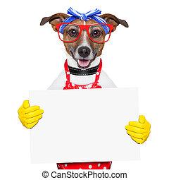 cane, casalinga